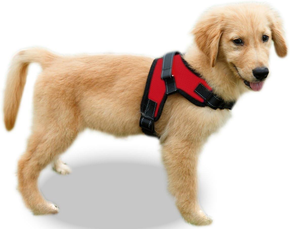 Amazon.com : Copatchy No Pull Reflective Adjustable Dog Harness with Handle  (Medium Red) : Pet SuppliesAmazon.com