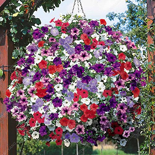 200 Seeds Heirloom Hanging Petunia Mixed Seeds Color Waves Hanging Basket Petunia Beautiful Flowers Light Up Your Garden Purple ()