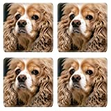 MSD Natural Rubber Square Coasters IMAGE ID: 37531026 beautiful American Cocker Spaniel close up