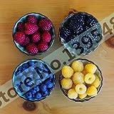 4 generi di colore 4000 semi di lampone (1000 PCS blu, 1000black, 1000 rosso, giallo 1000) deliziosi piante da frutto