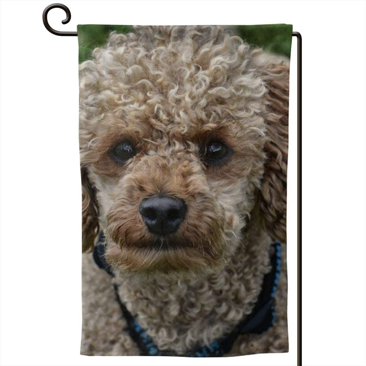 aimo ypu Cute Poodle Double Sided Home Garden Flag Welcome Small Garden Yard Flags,Durable Home Decorative Outdoor Decorative Flag for All Seasons & Holidays 12.5 X 18inch
