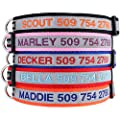 Gotags Reflective Personalized Dog Collar Custom Embroidered With Pet Name And Phone Number In Blue Black Pink Red And Orange For Boy And Girl Dogs 3 Adjustable Sizes Small Medium And Large