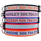 Reflective Personalized Dog Collar, Custom Embroidered w/ Pet Name & Phone - Blue, Black, Pink, Red & Orange Collars for Boy & Girl Dogs