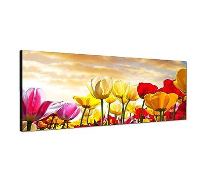 Campo di tulipani - Quadro su tela come Panorama in 150 x 50 cm ...