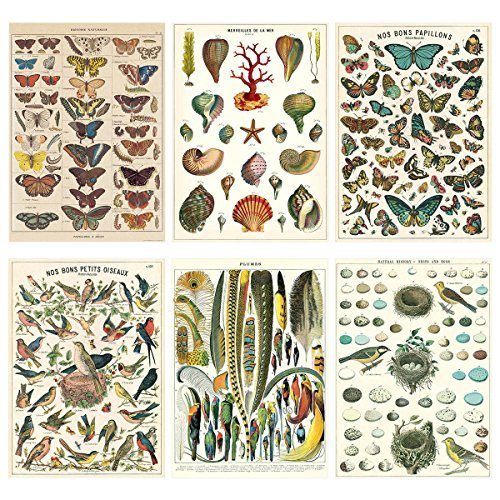 (French Nature Vintage Style Poster Set of 6 Decorative Paper 20 x 28 )