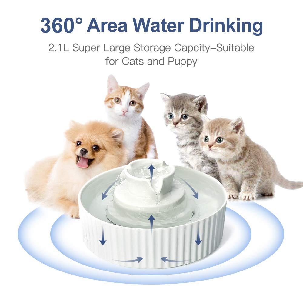 PetsHome Pets Home Ceramic bowl