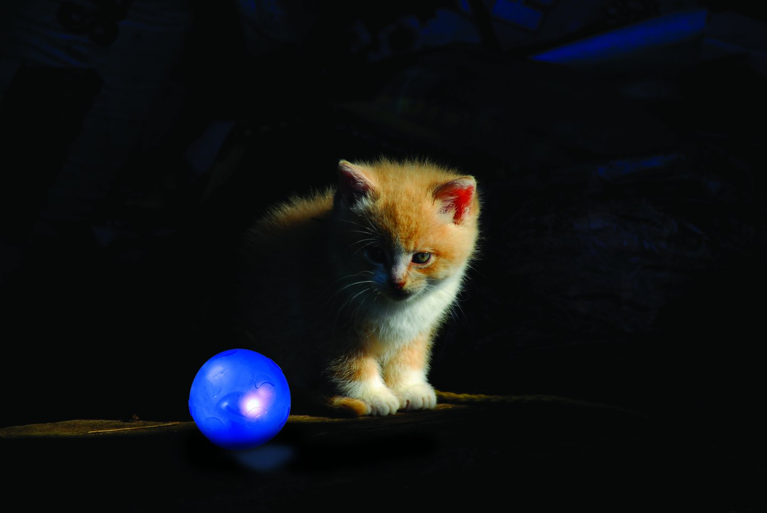 Nighttime Quiet Cat Toy Quiet Glow Twinkle Ball Cat Toy by Petstages