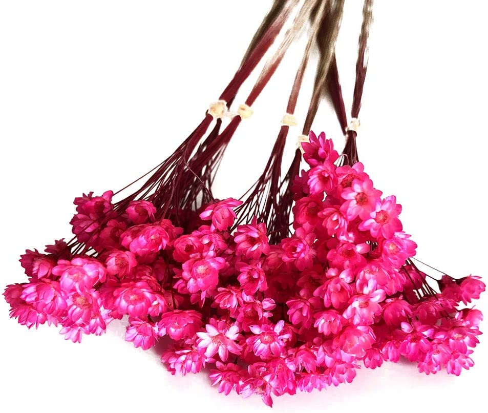 200/tallo amarillo Decoraitve flores secas mini Daisy ramo de manzanilla flores para decoraci/ón