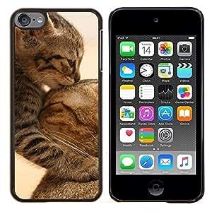 TECHCASE---Cubierta de la caja de protección para la piel dura ** Apple iPod Touch 6 6th Touch6 ** --Gatito lindo del bebé del gato de la madre Furry
