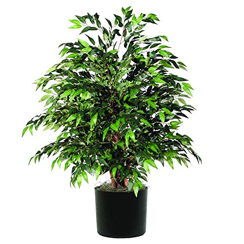 Vickerman TXX1440-06 Everyday Smilax Bush, Green Dark, 4'