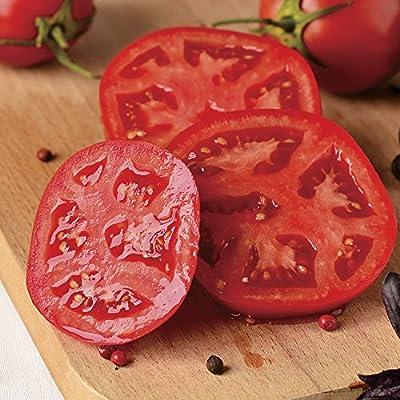Better Bush Improved Hybrid Tomato 200 Seeds By Jays Seeds : Garden & Outdoor
