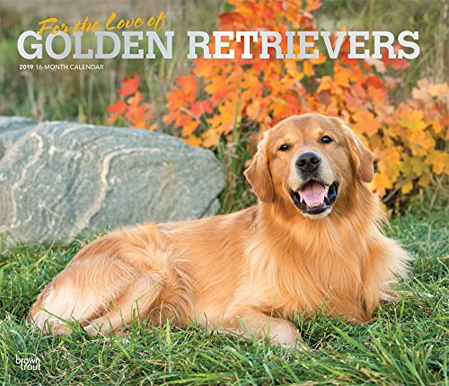 For the Love of Golden Retrievers 2019 14 x 12 Inch Monthly Deluxe Wall Calendar with Foil Stamped Cover, Animal Dog Breeds (English, French and Spanish Edition)