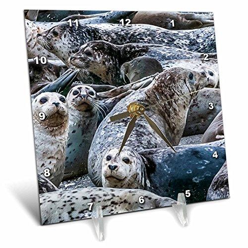 Washington State Desk Clock - 3dRose Danita Delimont - Seals - Harbor seals, Puget Sound, Washington State, USA - 6x6 Desk Clock (dc_279623_1)