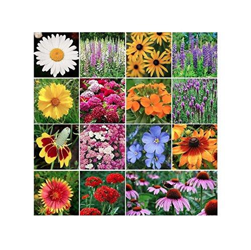10,000 All Perennial Wildflower Seeds