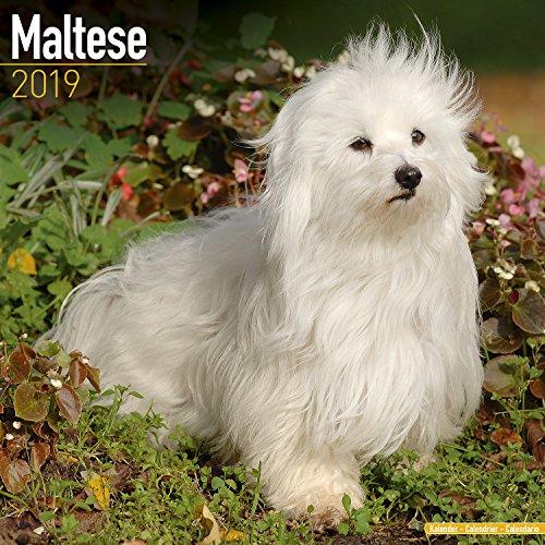 8 best dog calendars 2018-2019. maltese