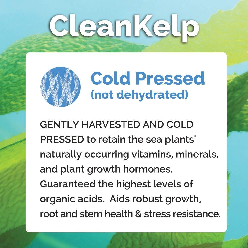 Bloom ciudad Premium prensado en frío 100% orgánico Clean ...