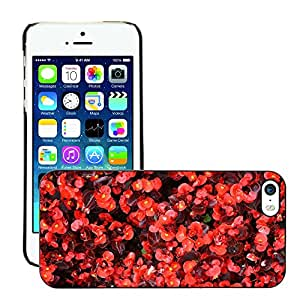 Print Motif Coque de protection Case Cover // M00157423 Begonia Flor de la planta Naturaleza // Apple iPhone 5 5S 5G