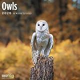 2020 Owls Wall Calendar by Bright Day, 16 Month 12 x 12 Inch, Cute Animal Bird