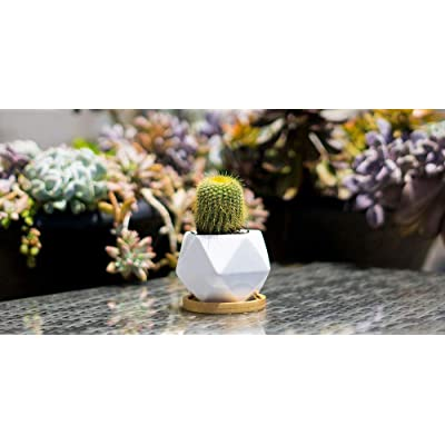 Brand New White Ceramic Geometric Pot Planter for Succulents /& Cactus Flowers