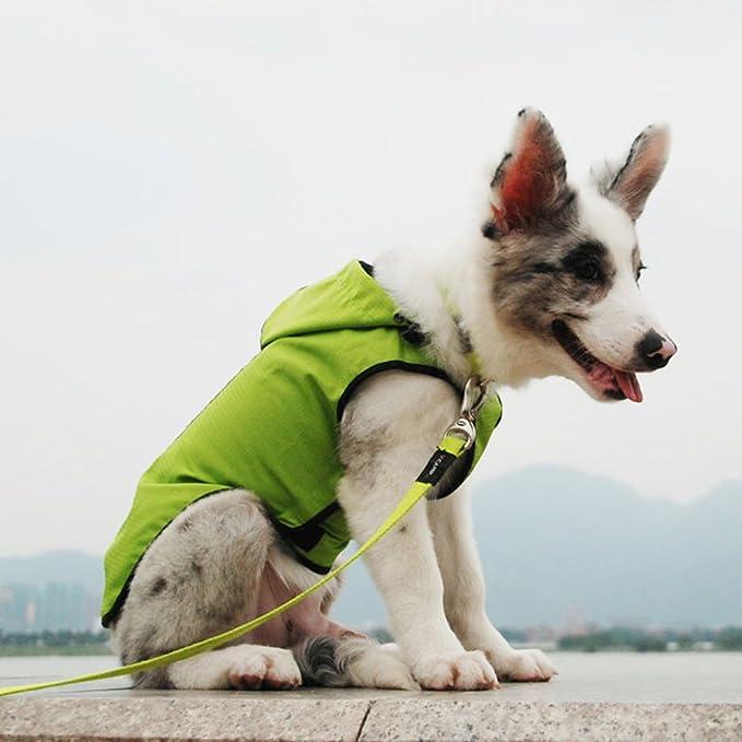 Jacke Hund