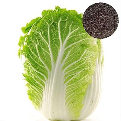50pcs Russian Cabbage Vegetable Vitamin Bonsai Garden Home Gift: Garden & Outdoor