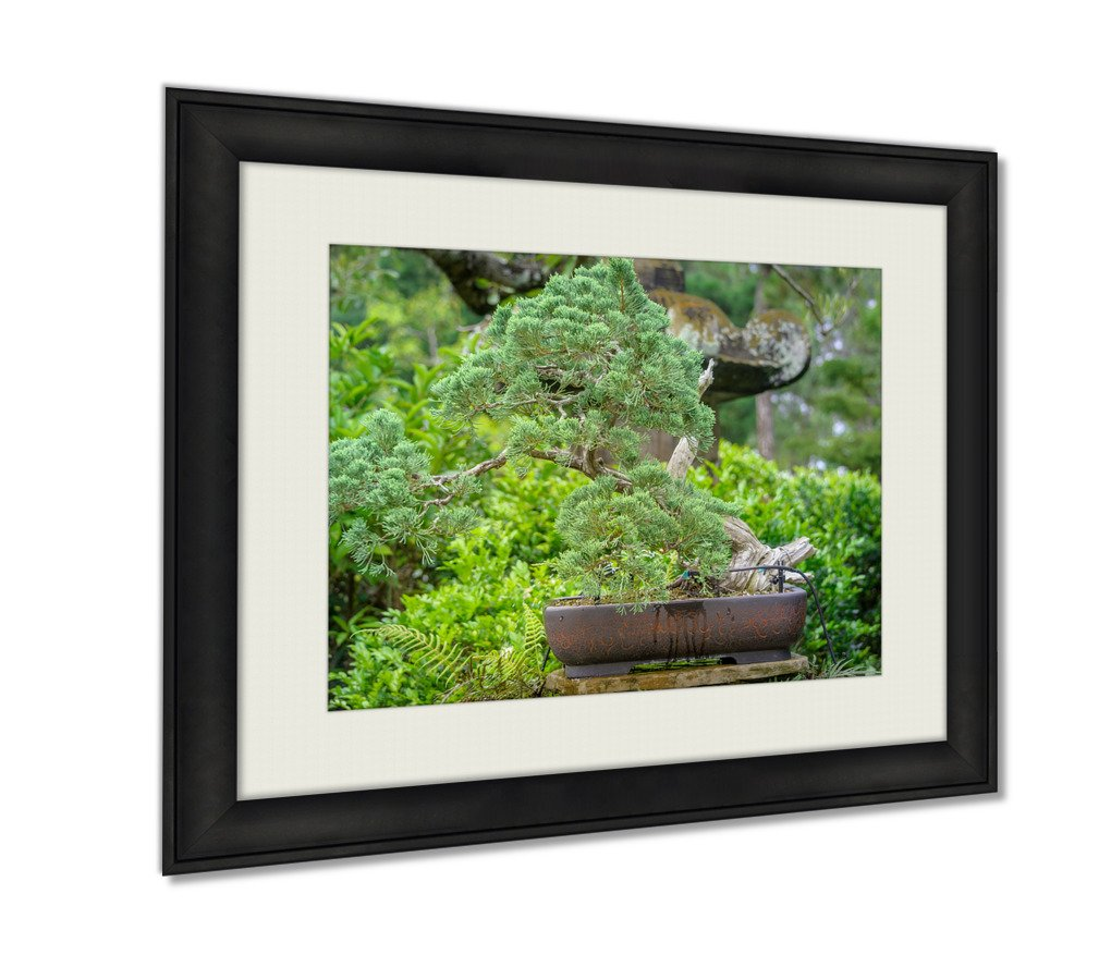 Ashley Framed Prints, Bonsai Tree In The Middle Of Exotic Garden In Tampa Florida, Wall Art Decor Giclee Photo Print In Black Wood Frame, Ready to hang, 20x25 Art, AG6547054