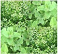 2,0000 x SWEET MARJORAM Seeds - FRAGRANT EXOTIC Sweet Pine & Citrus Flavor - Pleasing AROMATIC Fragrance - Zone 5 And UP - By MySeeds.Co