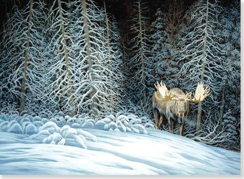 Moose in Moonlight Deluxe Boxed Holiday Cards (Christmas Cards, Greeting Cards) -