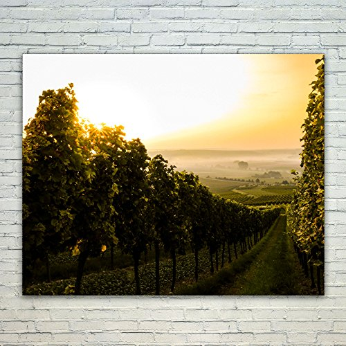 Westlake Art Vineyard Wine - 16x20 Poster Print Wall Art - Modern Picture Photography Home Decor Office Birthday Gift - Unframed 16x20 Inch - Coppola Winery