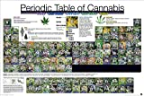 weed pictures - Laminated PeriodicTable of Cannabis Weed Marijuana Drug Poster Print 24x36