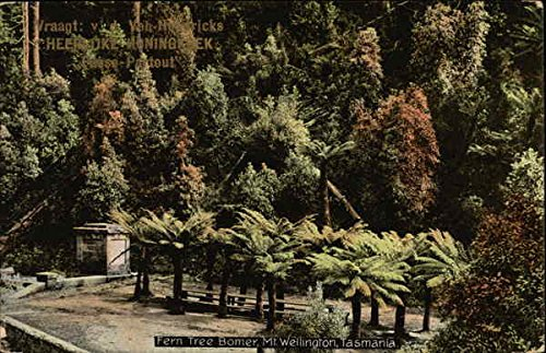 Fern Tree Bomer, Mt. Wellington South Pacific Australia Original Vintage ()