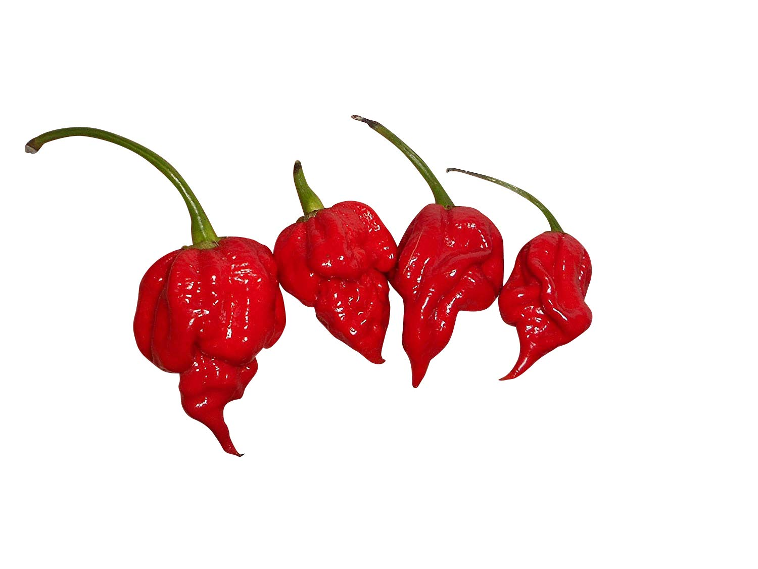scotch bonnet seeds how to grow