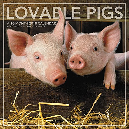 2018 Lovable Pigs Wall Calendar