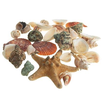 Homeford Decorative Sea shells ortment Vase Filler, 35-piece ... on amazon wallets, amazon wine decanter, amazon garden stools, amazon frames,