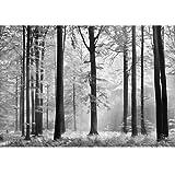 Avalon Black & White Forest Photo Wallpaper Wall Mural