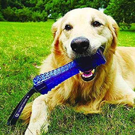 GiGwi Transparent Blue//Purple Push-to-Mute Johnny Stick Dog Toy