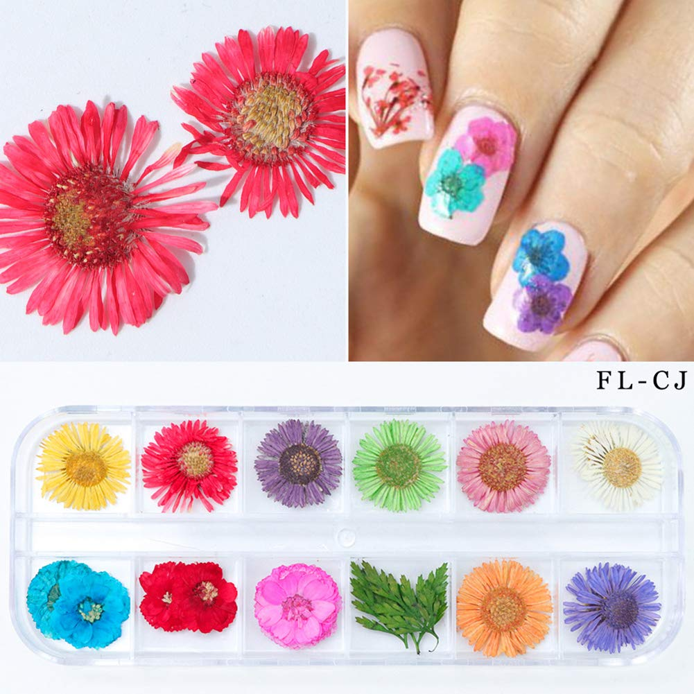 Amazon.com: Romote 1PACK Nail Art Accessories Dried Flowers 12 Nail ...