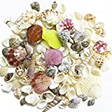 teeny tiny tank - BcPowr Sea Shells Mixed Beach Seashells, Various Sizes And Colorful Natural Seashells Perfect for Vase Fillers,Wedding Decor Beach Theme Party , Home Decorations,DIY Crafts, Fish Tank,Candle Making.