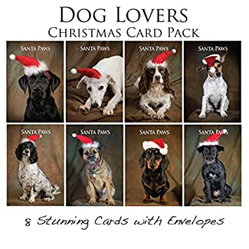 Dog Christmas Card Photo.Dog Christmas Card Pack 8 Canine Xmas Cards With Envelopes By Charles Sainsbury Plaice Labrador Spaniel Dachshund Jack Russell Patterdale