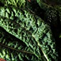 Kale Garden Seeds - Premier - Non-GMO, Heirloom Vegetable Gardening, Microgreens & Sprouts Seeds