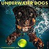 Underwater Dogs 2016 Wall Calendar (12x12)