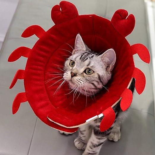 YUEBAOBEI Conos De Recuperación para Mascotas/Collar Recuperación ...