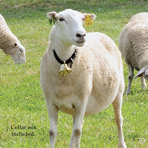Swiss Brass Bell for Sheep, Pets and Livestock