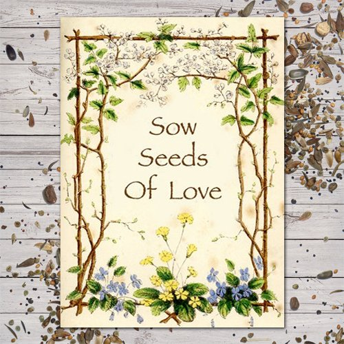 Favor Seeds Baby Shower (Set of 25 Butterfly Garden Seed Packet Favors (F03)