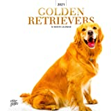 Golden Retrievers 2021 12 x 12 Inch Monthly Square Wall Calendar with Foil Stamped Cover by StarGifts, Animals Dog Breeds Ret