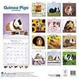 Guinea Pig Calendar - Cute Animal Calendar - Calendars 2017 - 2018 Wall Calendars - Animal Calendar - Guinea Pigs 16 Month Wall Calendar by Avonside