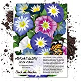 Seed Needs, Ensign Morning Glory Mixture (Convolvulus tricolor) 250 Seeds