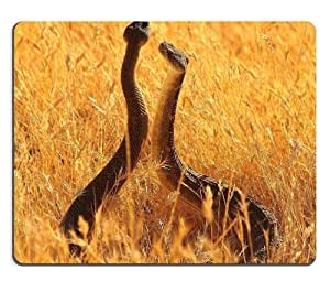 Animal Wildlife Snake Grassland Yellow Couple Rattlesnake Viper Mouse Pads Customized Made to Order Support Ready 9 7/8 Inch (250mm) X 7 7/8 Inch (200mm) X 1/16 Inch (2mm) High Quality Eco Friendly Cloth with Neoprene Rubber Luxlady Mouse Pad Desktop Mousepad Laptop Mousepads Comfortable Computer Mouse Mat Cute Gaming Mouse pad