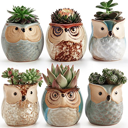 SUN-E 6 In Set 2.5 Inch Owl Pot Ceramic Flowing Glaze Base Serial Set Succulent Plant Pot Cactus Plant Pot Flower Pot Container Planter Bonsai Pots With A Hole Perfect Gife (Succulent Garden)