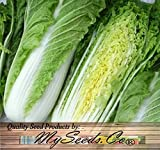 300 Chinese Michihili Cabbage Seeds - Napa ~Sweet & Mild Cylindrical Leafy Heads